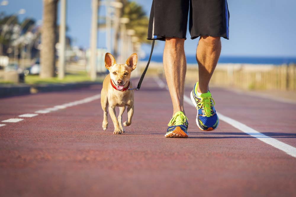 Small dog running with owner on a track.